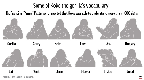 Koko, the Gorilla Who Knew Sign Language, Has Died