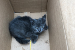 """The Prince George's County Fire Department rescued a kitten that they named """"River"""" from a car fender on Friday, June 22, 2018. (Courtesy Prince George's Fire Department)"""
