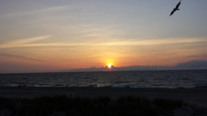 sunrise over ocean city with a bird flying by