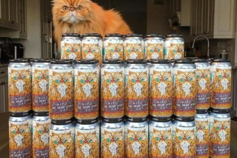 Beer of the Week:  Fat Orange Cat Vito the Beer Whale Cat IPA