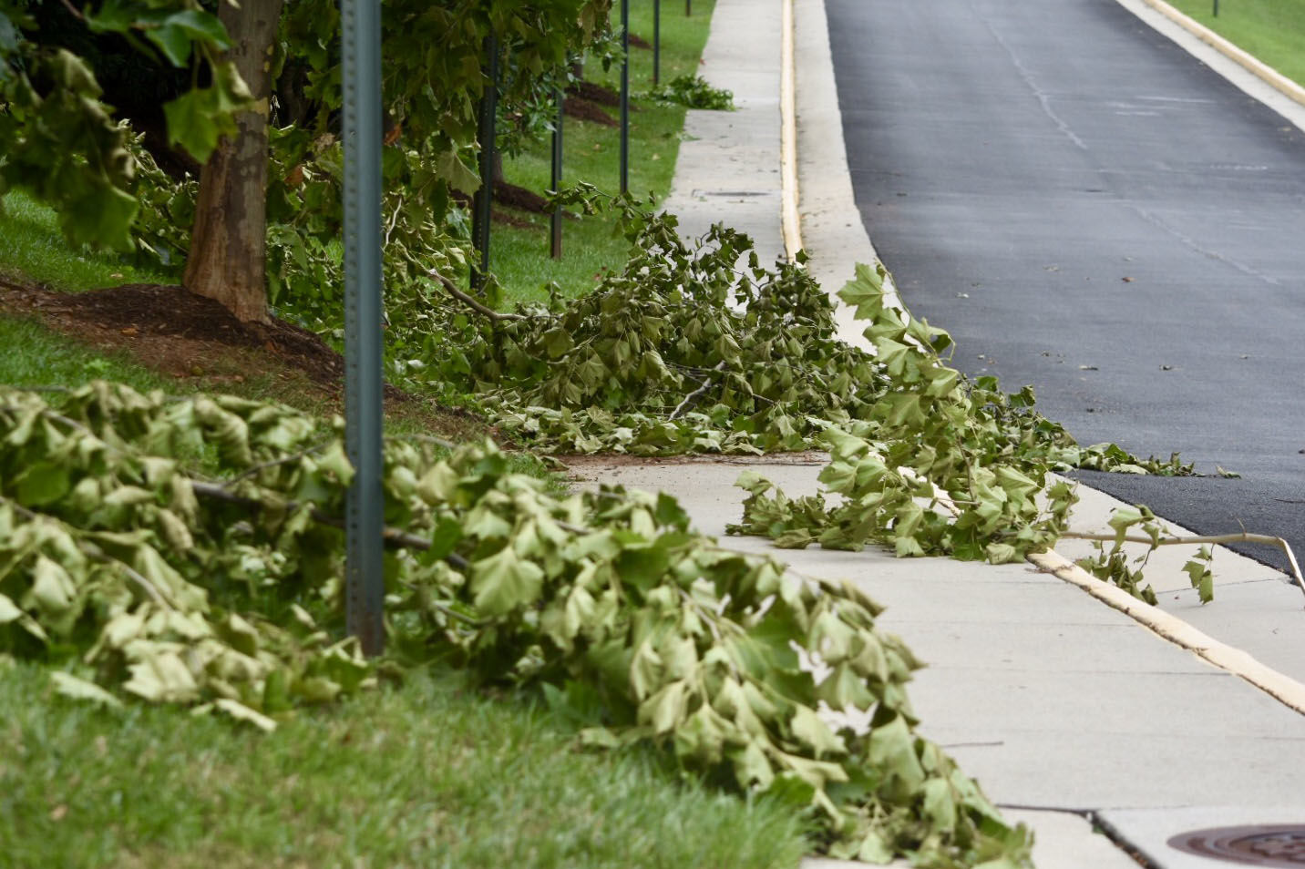 Downed trees in Alexandria near where an EF-0 tornado briefly touched down July 24. (WTOP/Dave Dildine)