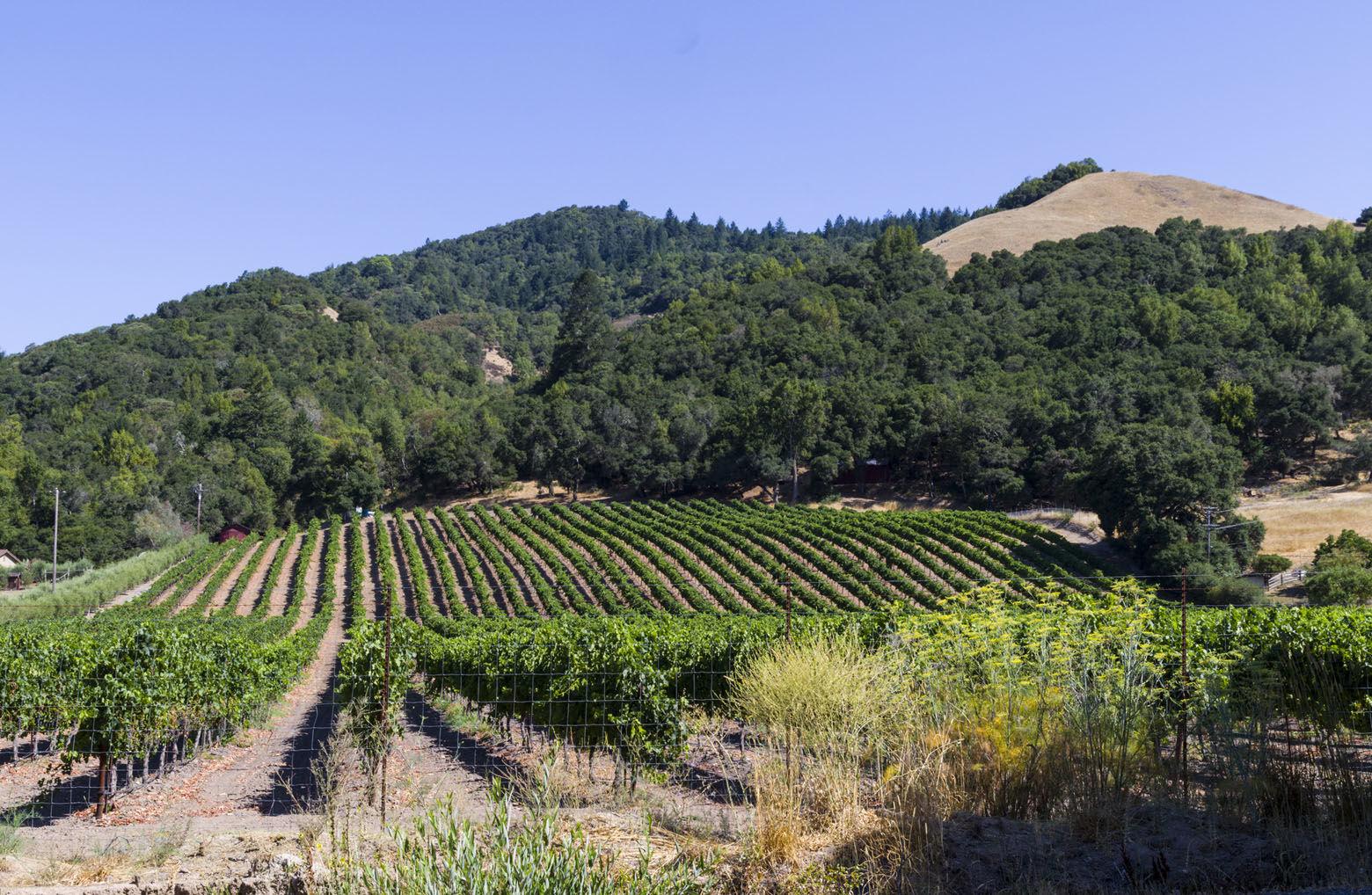 Vineyard outside Santa Rosa California