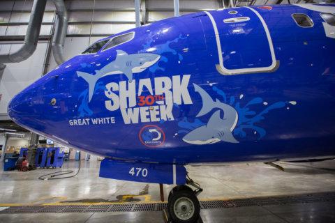 Southwest Airlines rolls out 'Shark Week' fleet