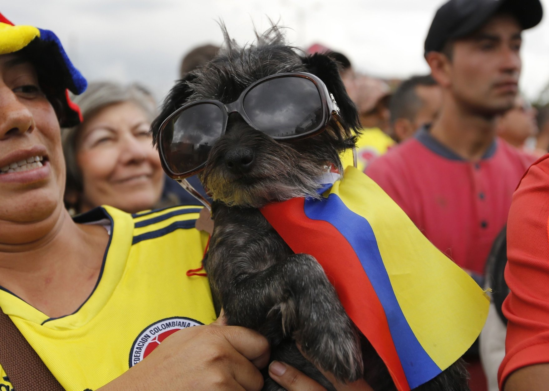 A Colombia soccer fan holds a flag-wearing dog in sunglasses during a live telecast of the Russia World Cup match between Colombia and England in Bogota, Colombia, Tuesday, July 3, 2018. (AP Photo/Fernando Vergara)