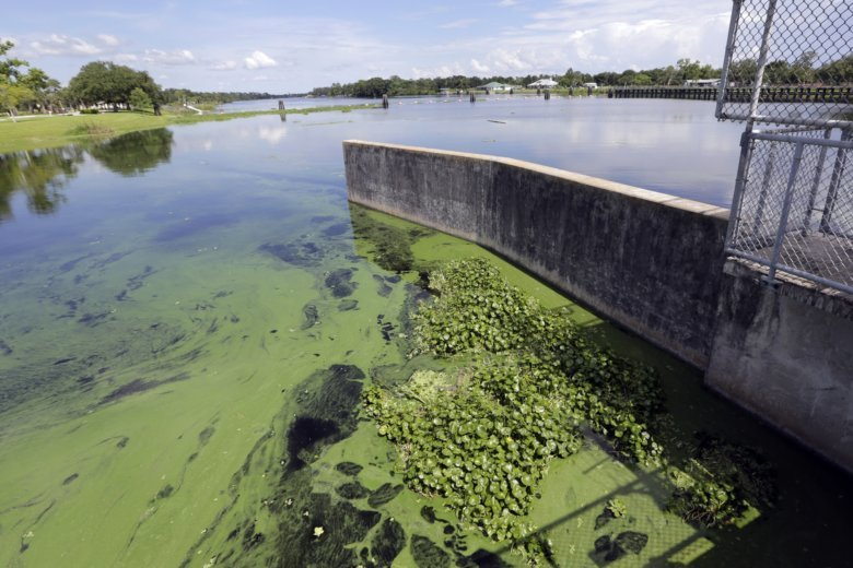 Lake Anna Algae Bloom Could Cause Rashes And Illness