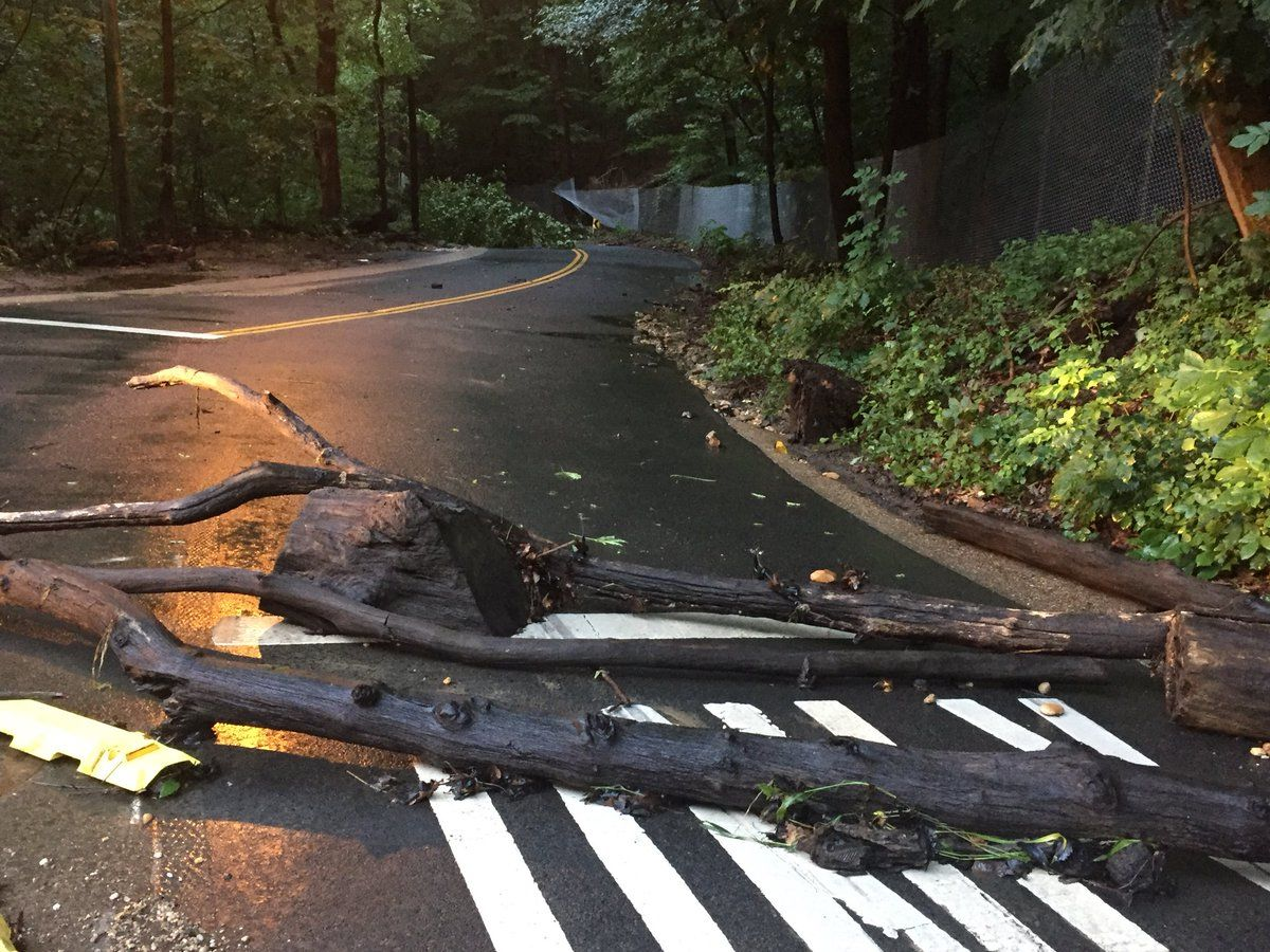 D.C. police reported flooding near Broad Branch Road in Rock Creek Park Wednesday night. Thursday morning, all lanes are blocked in the area because of downed trees. (WTOP/John Domen)