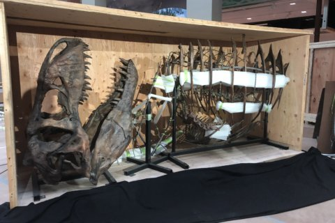 15-foot-tall T. rex among additions in Natural History Museum renovation