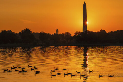 Heat emergency issued in DC ahead of hot, humid Father's Day