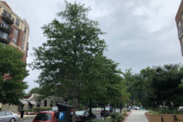 Clouds linger overhead in Northwest D.C. A flash flood watch has been issued for most of the D.C. area on Saturday. (WTOP/Patrick Roth)