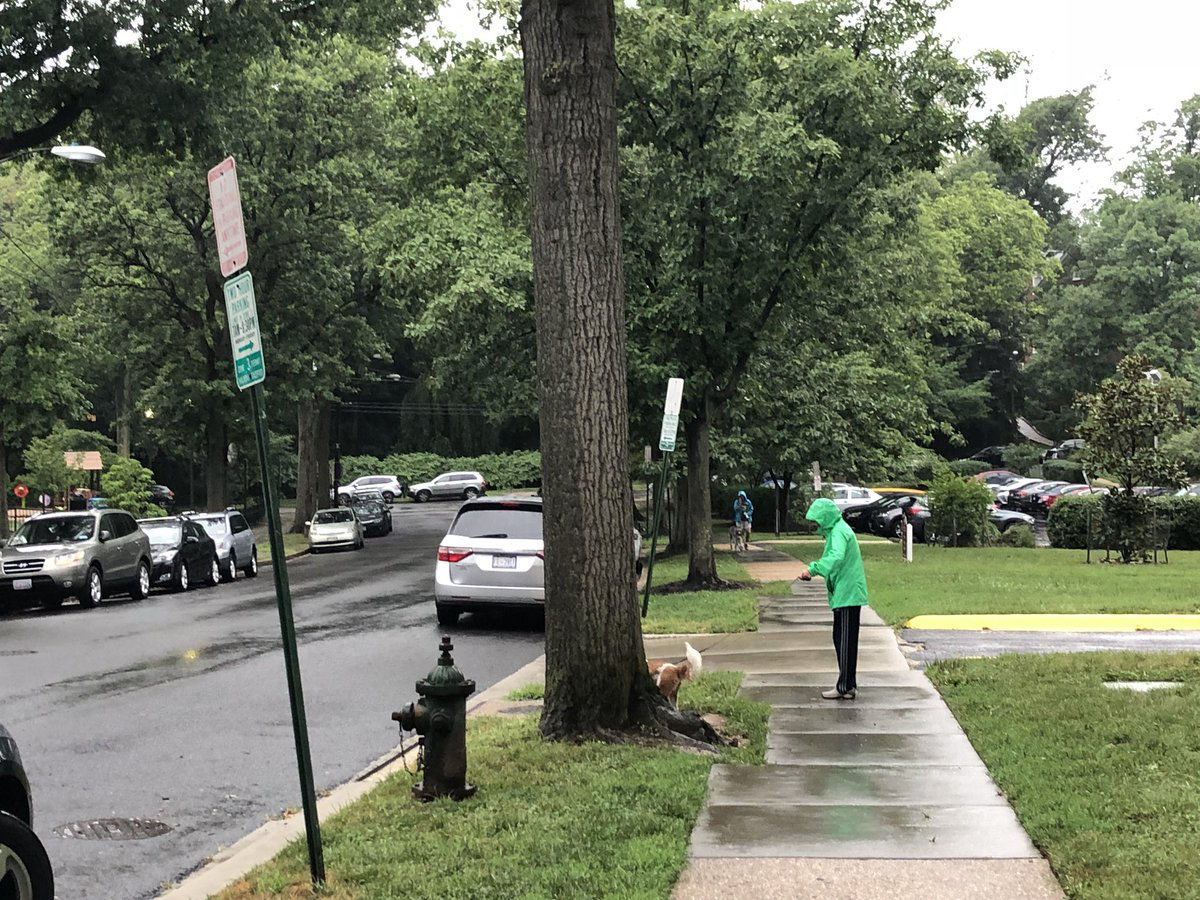 A dog and their human on their morning stroll in the rain in Northwest D.C. (WTOP/ Patrick Roth)