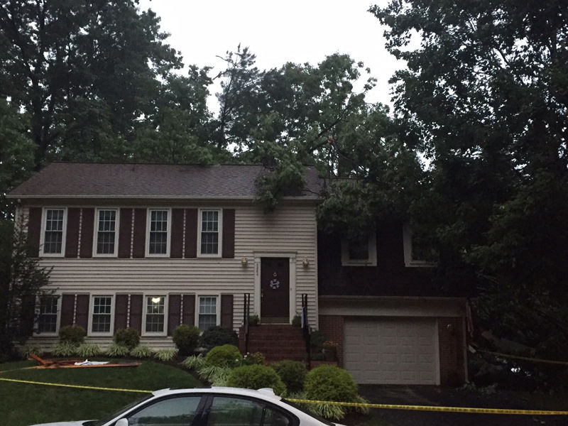In Fairfax County, a woman was killed when this tree fell onto her home in Burke, Virginia. (WTOP/John Domen)