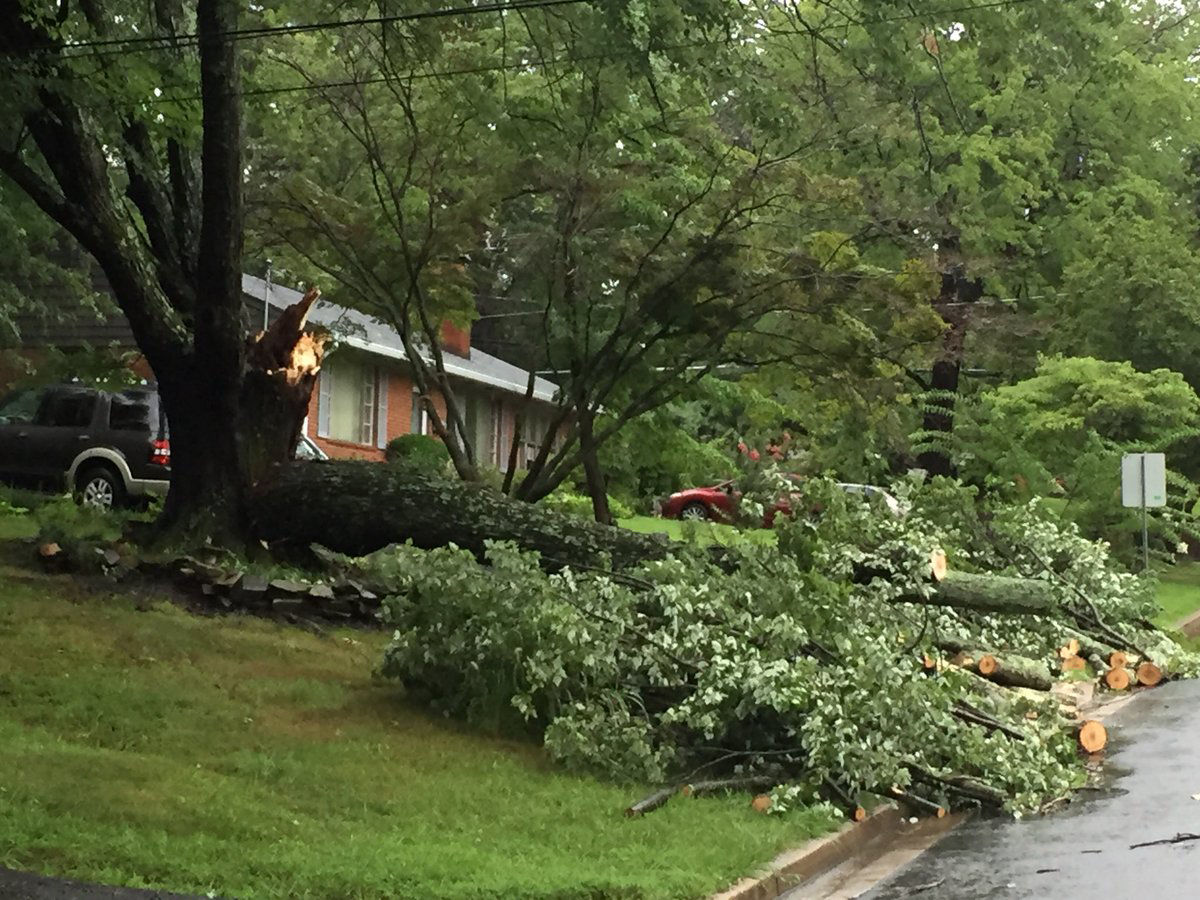 No one was hurt when this tree fell in Embassy Lane in Fairfax County. (WTOP/John Domen)