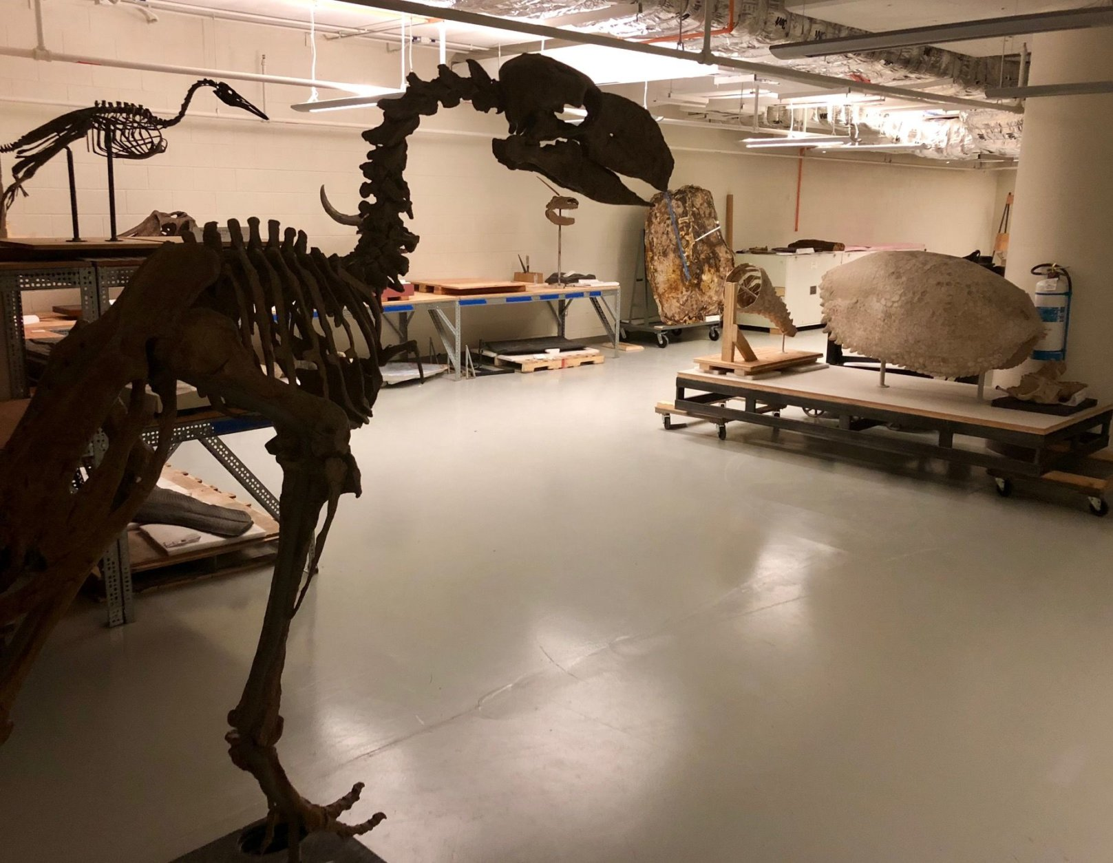 In a massive storage room inside the museum, partially constructed fossils, rare crystals and rows upon rows of large crates wait to make their way into what will be a 31,000-square-foot space. (WTOP/Megan Cloherty)