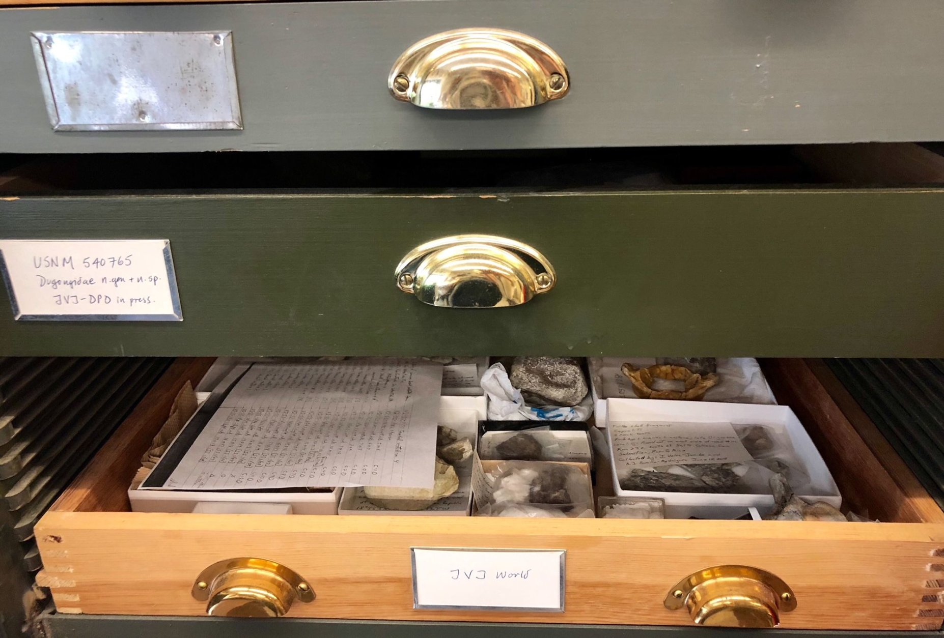 Inside curator Nick Pyenson's lab, are drawers of smaller fossil finds, some from Cerro Ballena in Chile. (WTOP/Megan Cloherty)