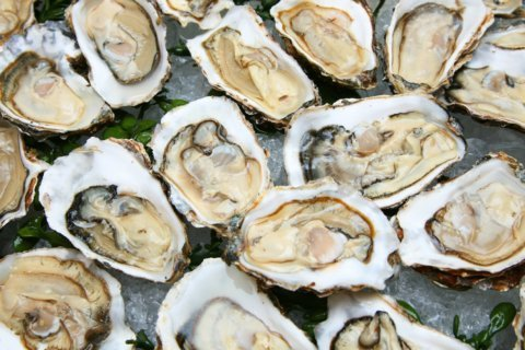Maryland lawmakers approve oyster restoration bill
