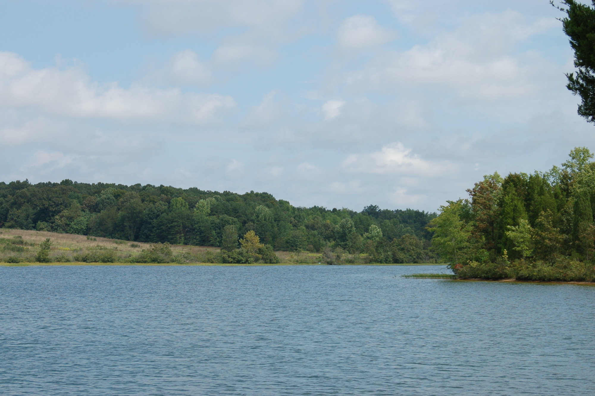 Parts of Lake Anna declared harmful to swimmers due to algae bloom