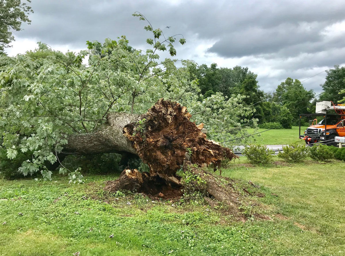 Ground around the D.C. area is saturated with water from all the recent rain. The National Weather Service has warned residents to watch out for tree toppling. (Courtesy Montgomery County Fire and Rescue's Pete Piringer via Twitter @mcfrsPIO)