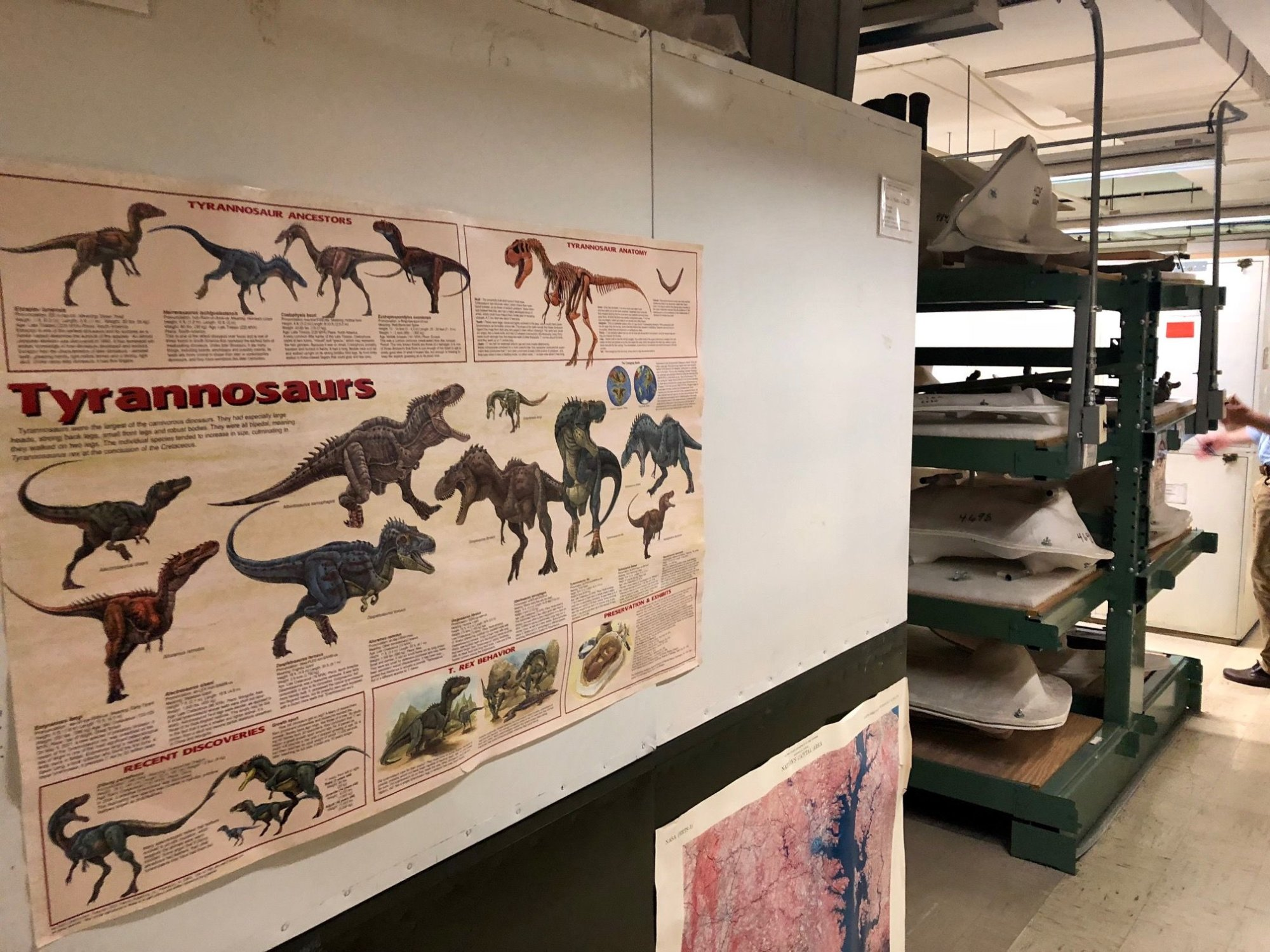 The much-anticipated reopening of the fossil hall will feature the return of the Tyrannosaurus rex. (WTOP/Megan Cloherty)
