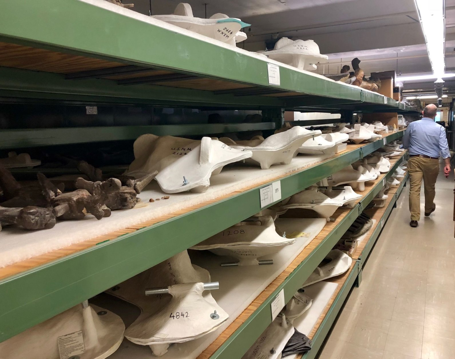 With the deadline of the fossil hall's opening next June looming large, the crunch is on to tell the story of more than 700 rare specimens. (WTOP/Megan Cloherty)