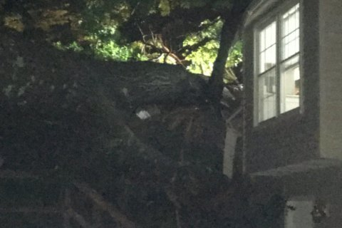 1 killed after tree falls through Fairfax Co. home