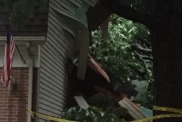 Here is a close-up of what the tree into the Burke home looks like. (WTOP/John Domen)