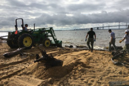 Maryland Department of Natural Resources crews remove storm debirs from the beach at Sandy Point State Park. (Courtesy Maryland DNR)