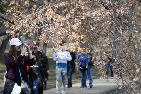 Another record year for DC tourism: 22.8M visitors