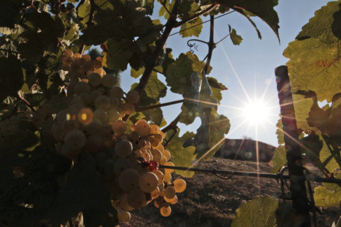 Wine of the Week: Wines from Italy's ports of call