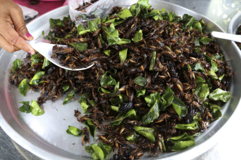 Skip the probiotics: Eating crickets can keep your gut healthy, study shows