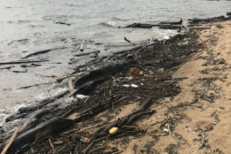 The Anne Arundel Department of Health has advised people against swimming in some area beaches following the pile up of debris. (Courtesy Anne Arundel County Department of Health)