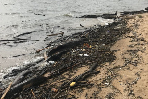 Muck piles up at Sandy Point, other beaches; officials seek volunteers for cleanup