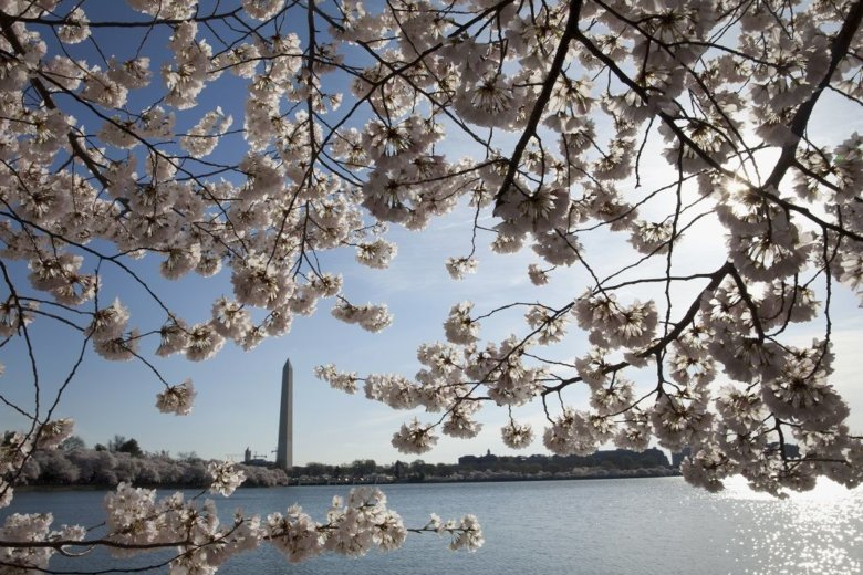How To Get Around Dc During The 2019 National Cherry Blossom