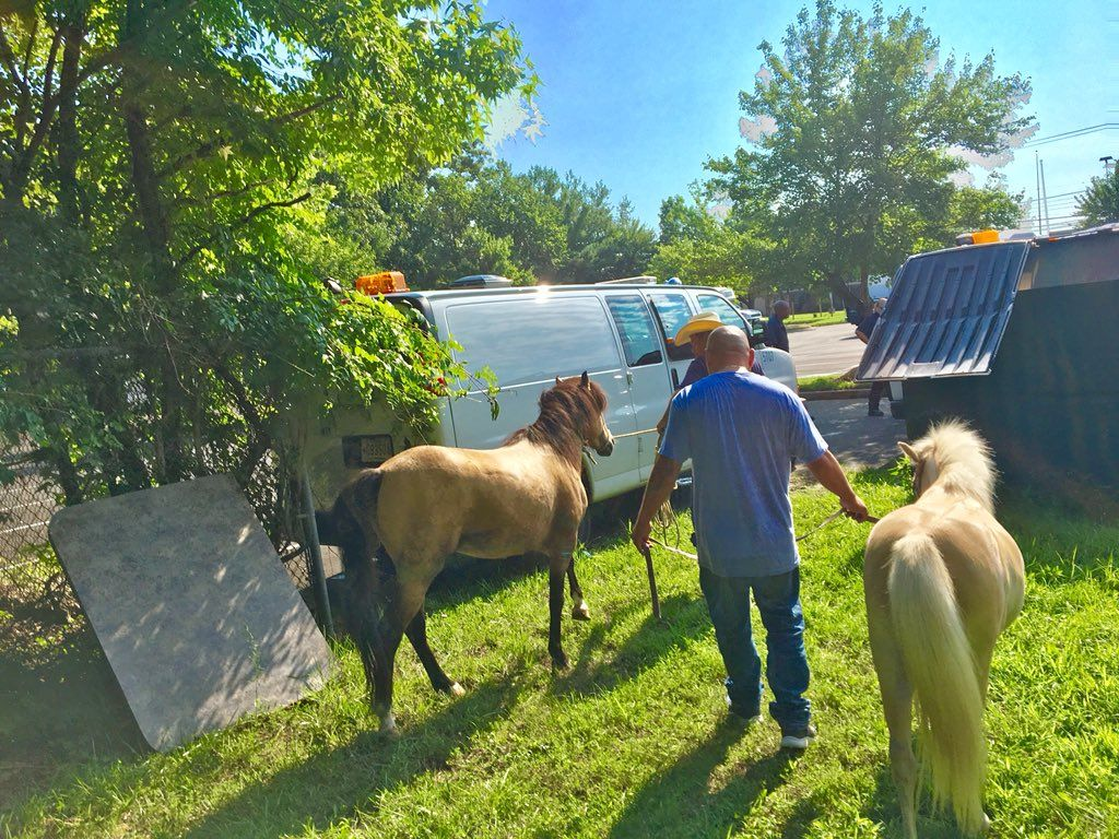 The horses were led back to their barn after wandering away Sunday morning. (Courtesy Prince George's County Fire)
