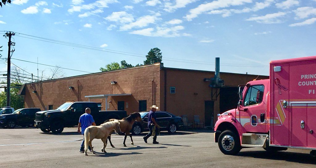 Prince George's County Animal Shelter were able to contact the owner, who led them back to their barn. (Courtesy Prince George's County Fire)