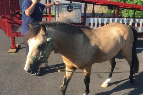 Horsin' around: Horses find 'safe space' at Prince George's Co. fire station
