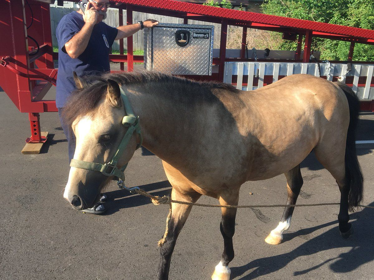 One of two of the horses that were wandering around at a Prince George's County fire station Sunday morning. (Courtesy Prince George's County Fire)