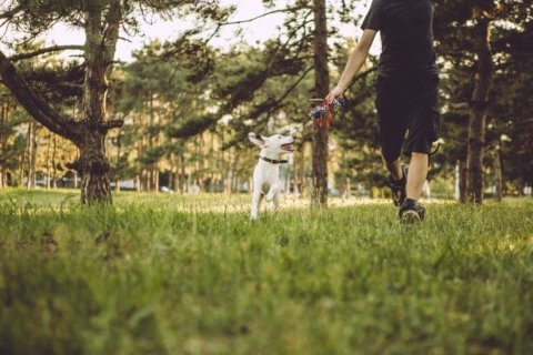 Six activities to enjoy with your pet this summer
