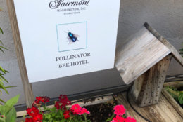 "The Fairmont Hotel, along with hosting honeybees, provides a ""hotel"" for wild, independent bees. (WTOP/Dan Friedell)"