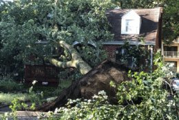 Strong winds blew through College Park Monday evening, displacing some residents.