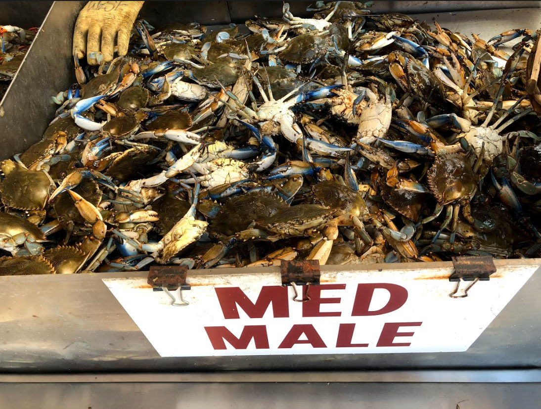 All in all though, Goodman said the season should end on a positive note, especially after this weekend, which historically sees lots of people making blue crab meals part of their end of summer tradition. (WTOP/Mike Murillo)