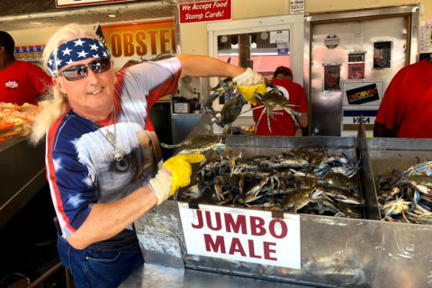 Md. blue crab season picks up at DC fish market for Labor Day weekend