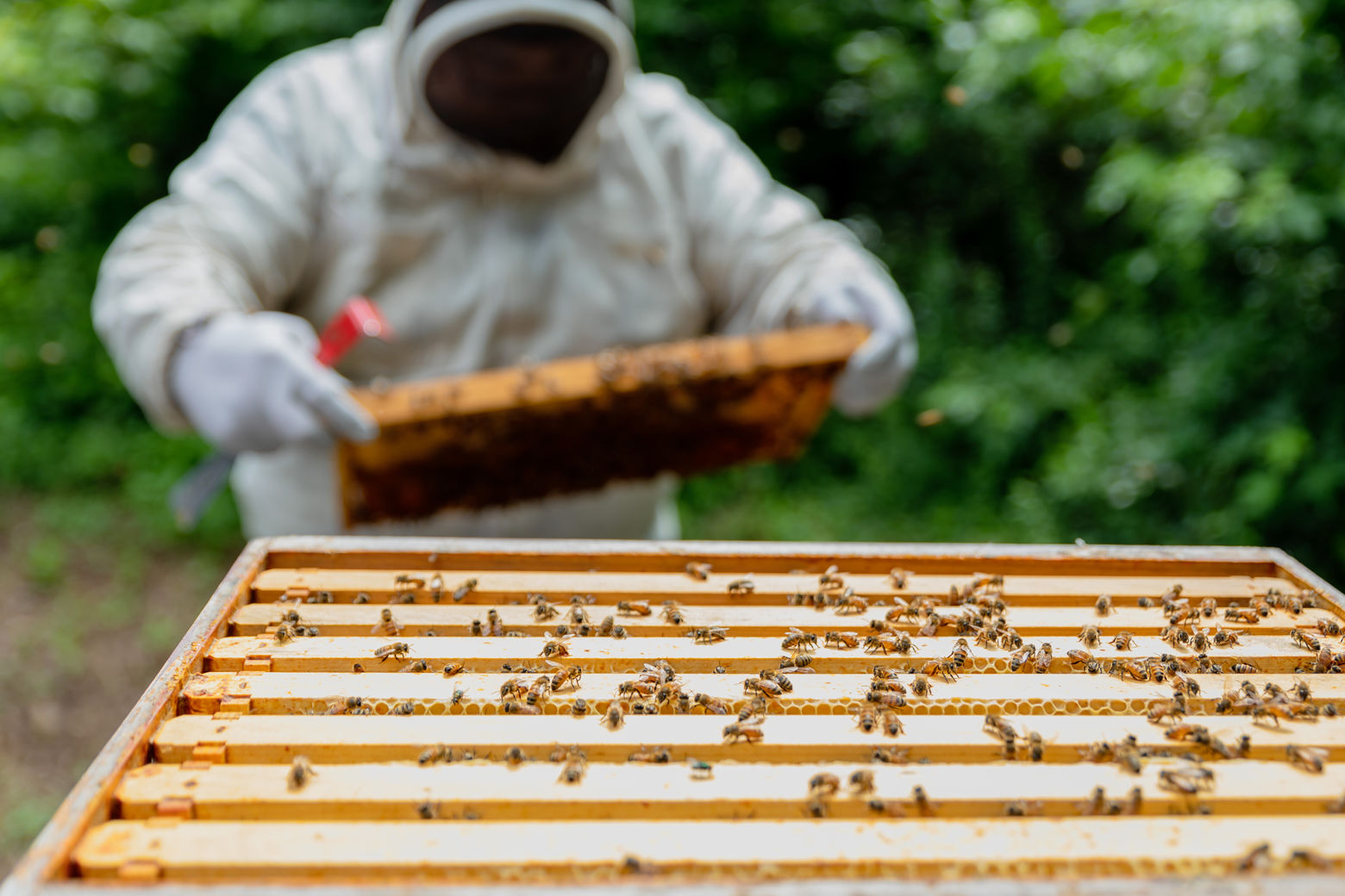 Honeybees live in multi-tiered boxes when they are kept in backyards and on rooftops. (Courtesy Accor Hotels)