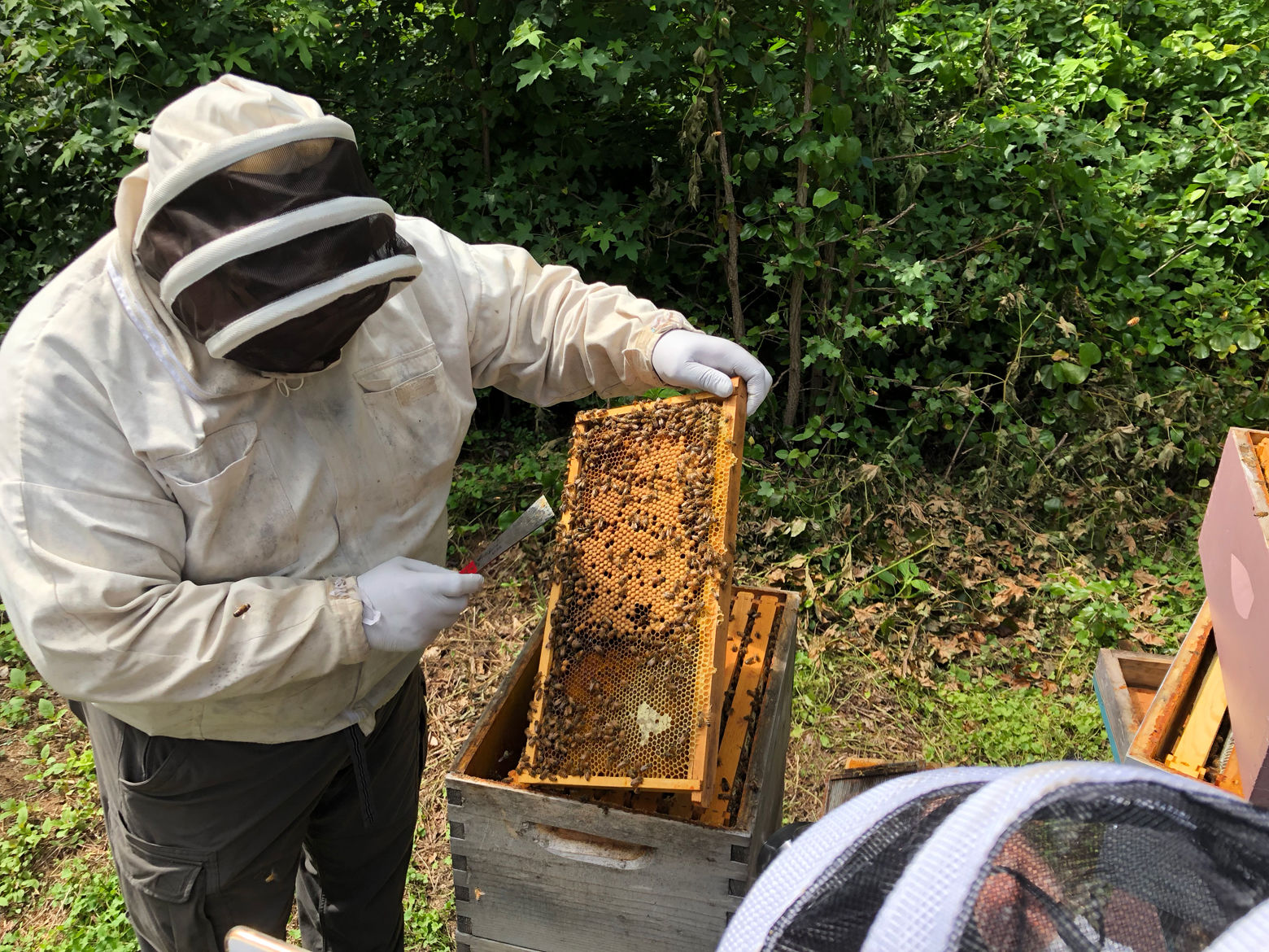 John Ferree inspects a screen from the hives he cultivates at the Mount Vernon Estate in Virginia on Aug. 13, 2018.. (WTOP/Dan Friedell)