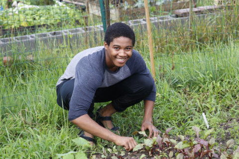After days of rain, resident digs in at DC community garden