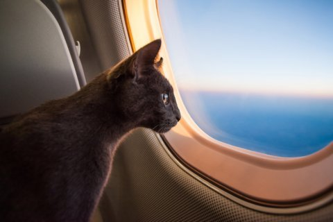 Southwest Airlines announces new rules for emotional support animals
