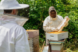 """You can't just buy bees and a box to put them in, and throw them in your backyard. You really have to be educated on how to manage them properly,"" said John Ferree, the beekeeper at the Kennedy Center. (Courtesy Accor Hotels)"
