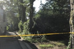 Trees were brought down  on Blackfoot Road after strong storms blew through College Park Monday evening.