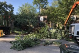 Trees on Blackfoot Road were knocked down after strong storms blew through College Park Monday.