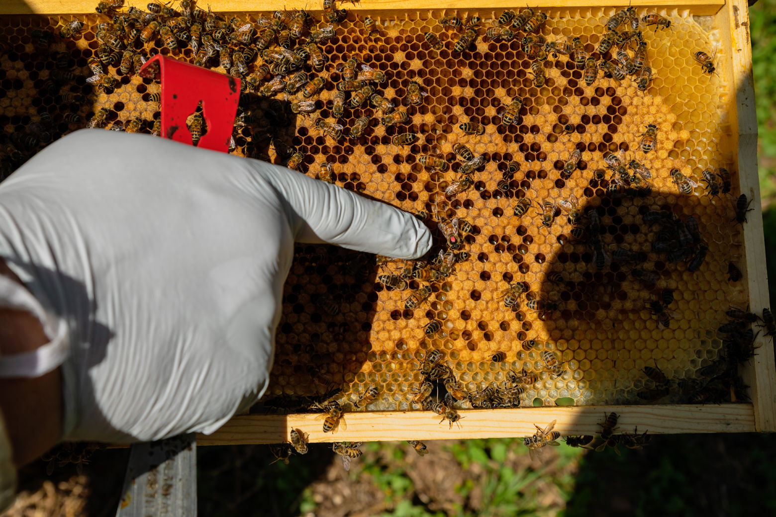 """You have to have an inspection done, you have to have your hives registered, so the inspector comes out and makes sure you have the right distance, the water source, the orientation, there are some basic rules,"" said beekeeper Kevin Platte, of keeping bees in D.C. (Courtesy Accor Hotels)"