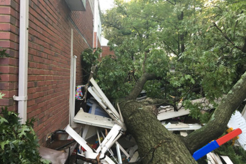 College Park residents displaced after storms, fallen trees damage homes